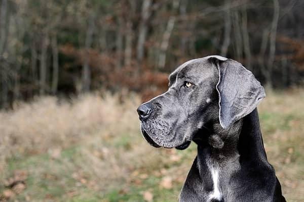 Foto de perfil del Grandanés