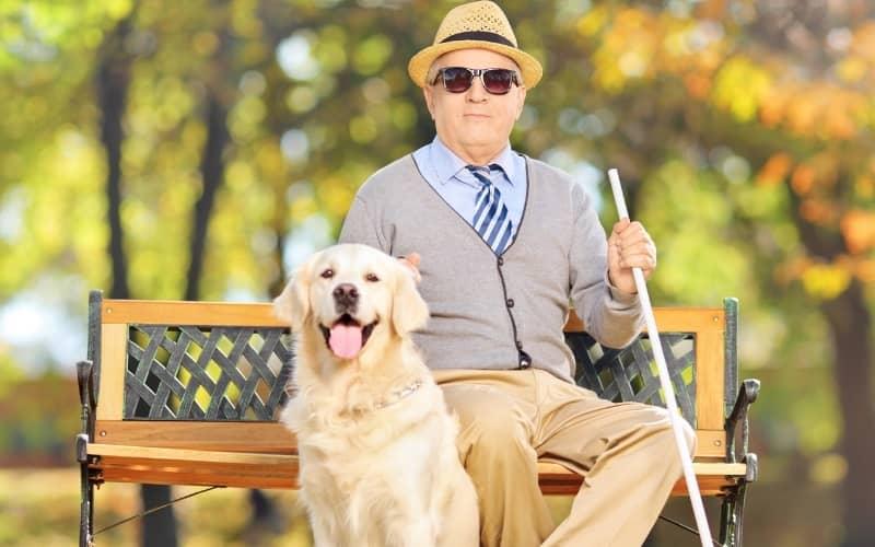 Labrador Retriever con una persona ciega