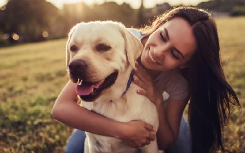 Labrador Retriever y su amada