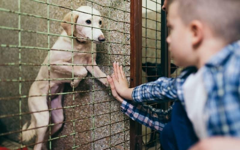 Niño adoptando al perro
