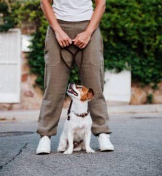Perro para un principiante