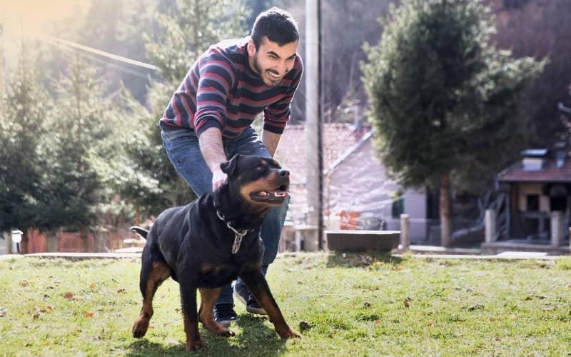 Rottweiler con su amo