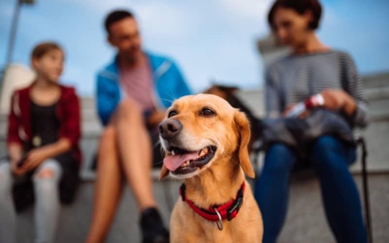 Vivir sin estres con tu perro de adopción